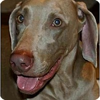 Adopt A Pet :: Sebastian  **ADOPTED** - Eustis, FL