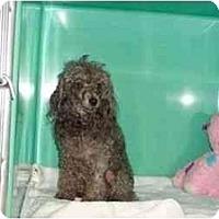 Adopt A Pet :: Annie - Secaucus, NJ