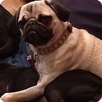 Adopt A Pet :: Gia - Avondale, PA
