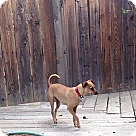 Adopt A Pet :: Char