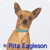 Adopt A Pet :: Jojo - Phoenix, AZ