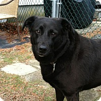 Adopt A Pet :: Maive - Courtesy Posting - Cheshire, CT
