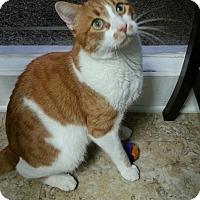 Adopt A Pet :: Cider - Palmdale, CA