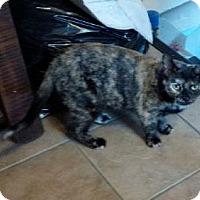 Adopt A Pet :: Precious - Burlington, ON