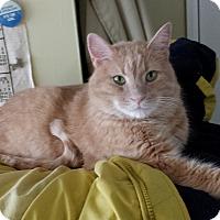 Adopt A Pet :: Moe - brewerton, NY