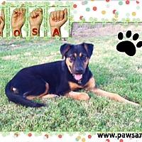 Adopt A Pet :: ROSA - Higley, AZ