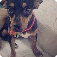 Adopt A Pet :: Shirley - Natchitoches, LA