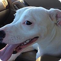 Adopt A Pet :: Luna - Coral Springs, FL