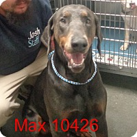 Adopt A Pet :: Max - baltimore, MD