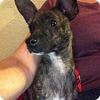 Adopt A Pet :: PRINCESS - Rancho Cucamonga, CA