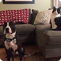 Adopt A Pet :: FRANK - sterling, MA