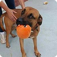 Adopt A Pet :: Shadow - Elmwood Park, NJ