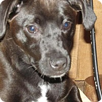 Adopt A Pet :: Cody - Rocky Mount, NC