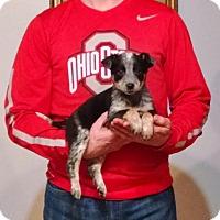 Adopt A Pet :: Minnie - South Euclid, OH