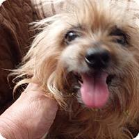 Adopt A Pet :: Gracie - Homestead, FL