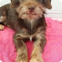 Adopt A Pet :: Ranger - Lawrenceville, GA