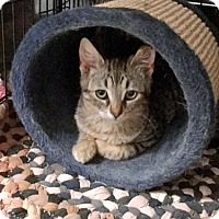 Adopt A Pet :: Sam - Toronto, ON