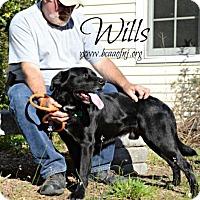 Adopt A Pet :: Wills - Willingboro, NJ