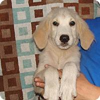 Adopt A Pet :: Regina - Oviedo, FL