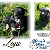 Adopt A Pet :: Zane - Boyd, TX