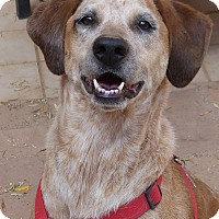 Adopt A Pet :: Lily Bean - Clarkdale, AZ