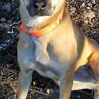 Labrador Retriever/Terrier (Unknown Type, Medium) Mix Dog for adoption in Sunbury, Ohio - Bess
