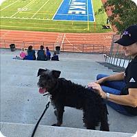 Adopt A Pet :: Fred - beverly hills, CA