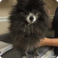 Adopt A Pet :: 5481 - Calhoun, GA