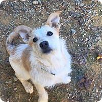 Adopt A Pet :: Annie - Charlotte, NC