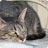 Adopt A Pet :: Winnie - Huntsville, AL