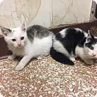 Adopt A Pet :: Chip and Biscuit - Mine Hill, NJ