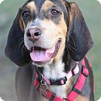 Adopt A Pet :: Penny Lane - SOUTHINGTON, CT