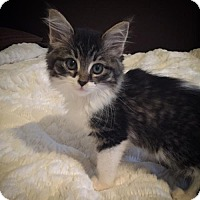 Adopt A Pet :: Evy C1540 - Shakopee, MN