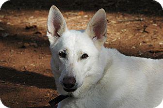 German Shepherd Dog Mix Dog for adoption in Lawrenceville, Georgia - Caleb