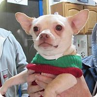 Adopt A Pet :: King Eeyore - Jackson, MO