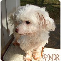 Adopt A Pet :: Oliver - Palm City, FL