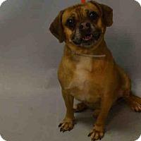 Adopt A Pet :: ROMEO - Brooklyn, NY