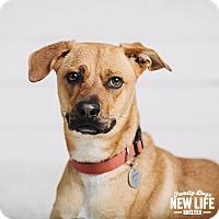 Adopt A Pet :: Annabelle - Portland, OR