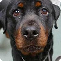 Adopt A Pet :: Cash - Hillsboro, NH