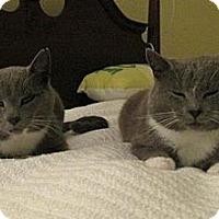 Adopt A Pet :: Mickie & Moochie - Waxhaw, NC