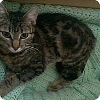 Adopt A Pet :: BELLA - Van Nuys, CA