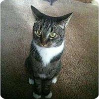 Adopt A Pet :: Tuddy - Saint Albans, WV