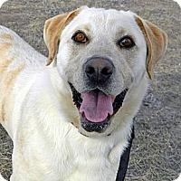 Adopt A Pet :: Ranger - Cheyenne, WY