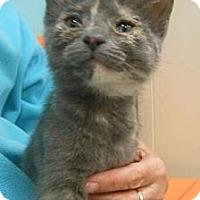 Adopt A Pet :: Glory - Reston, VA