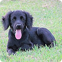 Adopt A Pet :: SHADA - Humboldt, TN