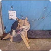 Adopt A Pet :: Splash/Pending - Zanesville, OH