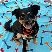 Adopt A Pet :: Molly - Mission Viejo, CA