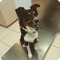Adopt A Pet :: Kyo - Scottsdale, AZ