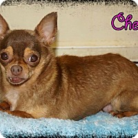 Adopt A Pet :: Cherry - S. Pasedena, FL