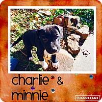 Adopt A Pet :: Minnie - Broken Arrow, OK